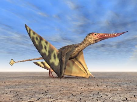 Pterosaur Rhamphorhynchus photo