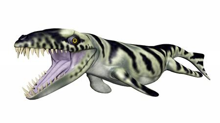 hugely: Dakosaurus Stock Photo