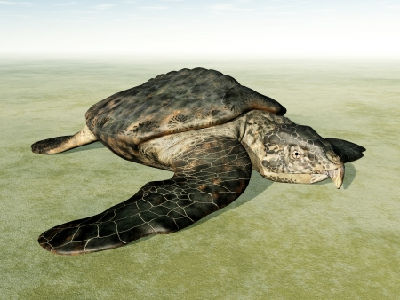 ancient turtles: Giant Sea Turtle Archelon on the Dry
