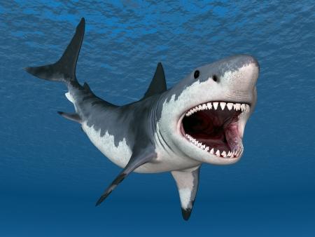 偉大な白いサメ 写真素材