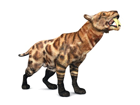 toothed: Saber-Toothed Cat Smilodon Stock Photo