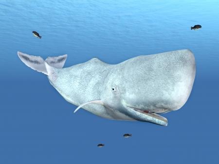 マッコウクジラ 写真素材