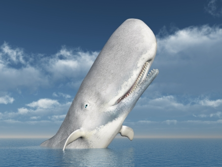 White Whale Stock Photo - 21011589
