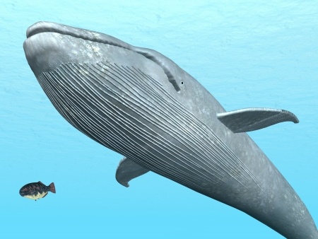 ballena azul: Ballena Azul