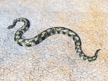 constrictor: Boa Constrictor