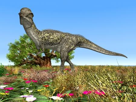 hugely: Dinosaur Stegoceras