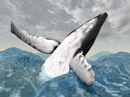humpback: Jumping Humpback Whale in the stormy ocean