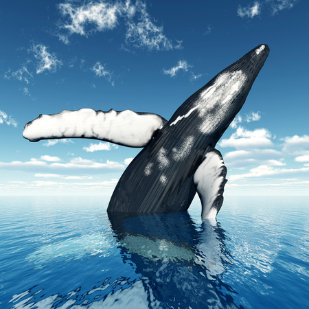 humpback: Jumping Humpback Whale