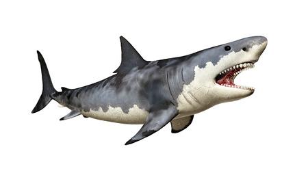 Grote Witte Haai op een witte achtergrond