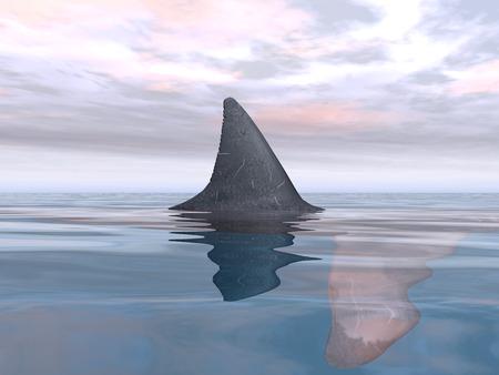 shark fin: Great White Shark Fin