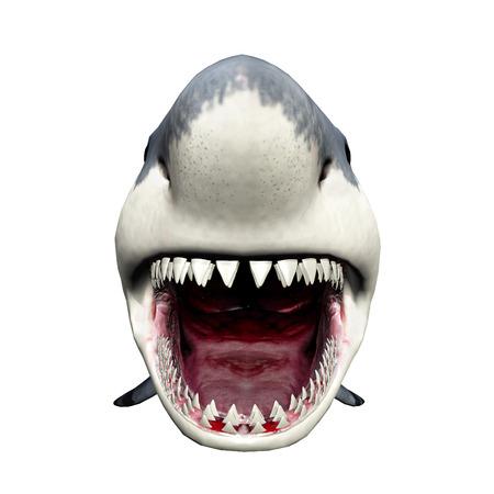 白い背景に分離された偉大な白いサメ 写真素材