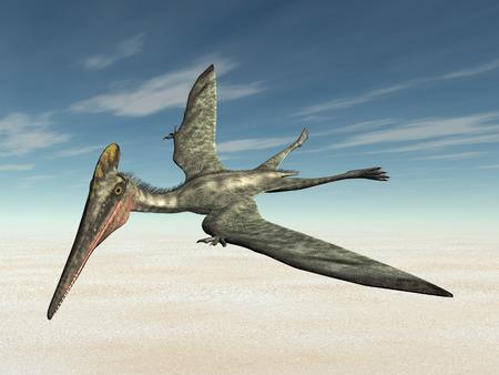pterosaur: Pterosaur Pterodactylus