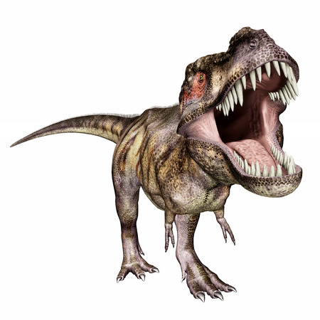Tyrannosaurus Rex isolated on white background Stock Photo