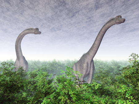 brachiosaurus: Dinosaur Brachiosaurus