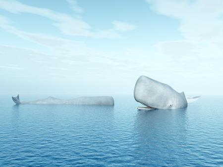 sperm whale: Sperm Whales