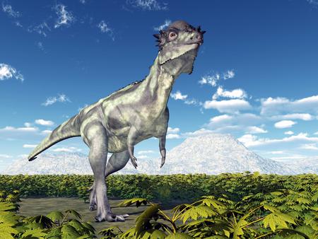 Dinosaur Pachycephalosaurus photo