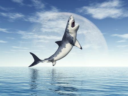 great white shark: Great White Shark