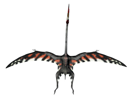 pterosaur: Pterosaur Quetzalcoatlus isolated on white background