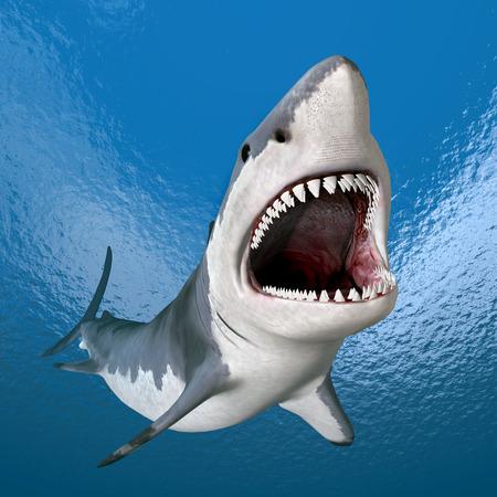 shark fin: Great White Shark
