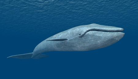 푸른 고래