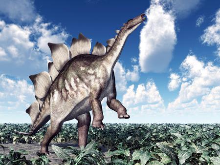 stegosaurus: Dinosaur Stegosaurus