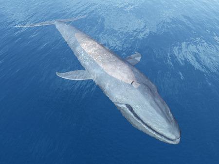 blue whale: Blue Whale