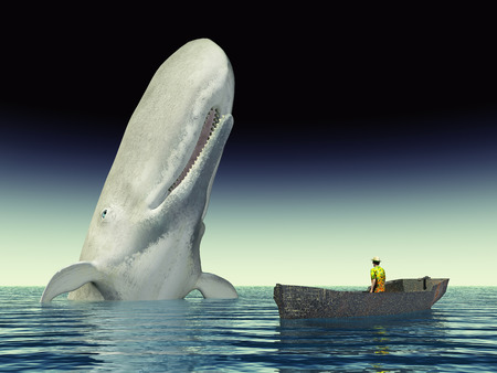 sperm whale: Whale Watching