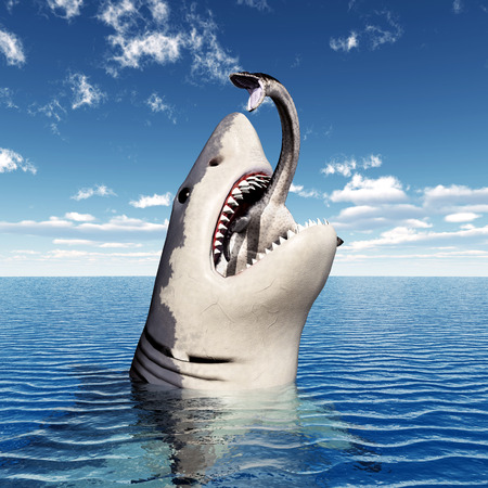 white shark: Great White Shark Eating