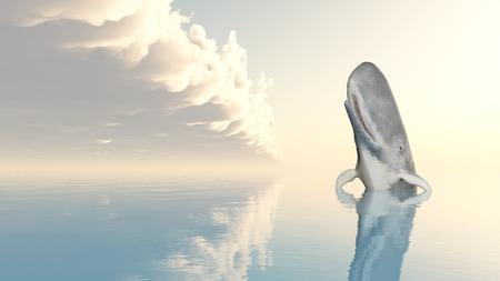 sperm whale: Sperm Whale