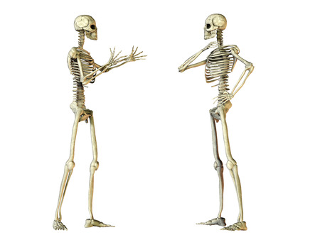 bodypart: Human skeleton Stock Photo