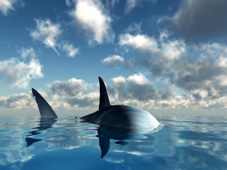 shark fin: Shark up close