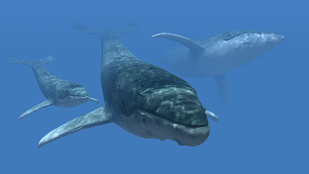 whales: Whales