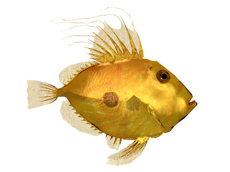 golden fish: Golden fish isolated on white background
