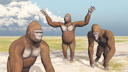 anthropoid: Three Gorillas