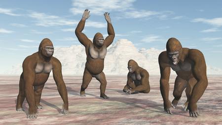 anthropoid: Four Gorillas