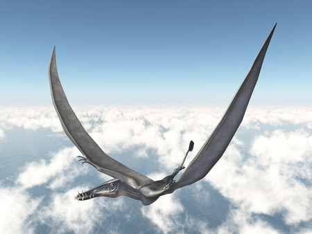 pterosaur: Pterosaur Dorygnathus over the clouds Stock Photo