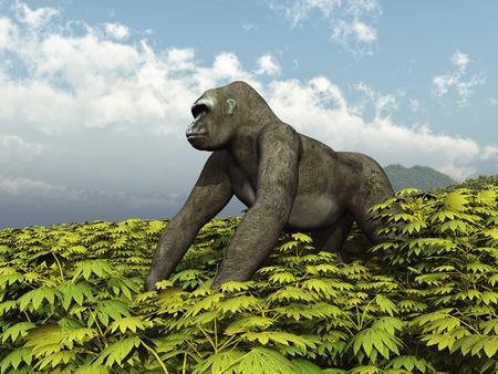 anthropoid: Silverback Gorilla