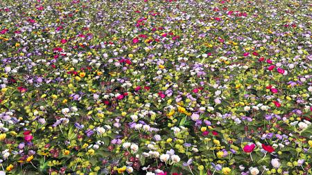 habitats: Wildflower meadow