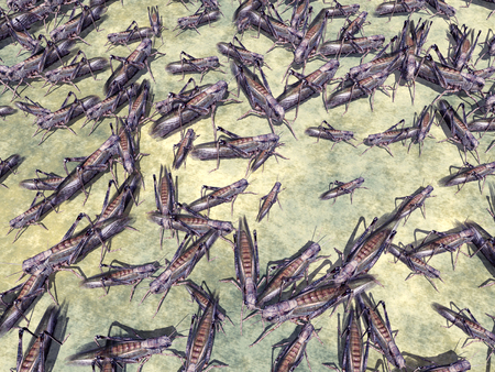 infestation: Grasshoppers Stock Photo