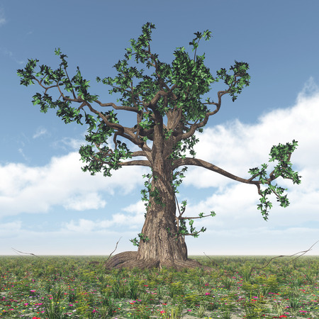 untouched: Great gnarled tree Stock Photo