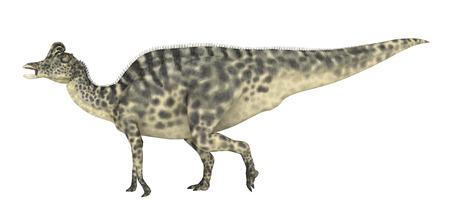 white  background: Dinosaur Velafrons isolated on white background Stock Photo