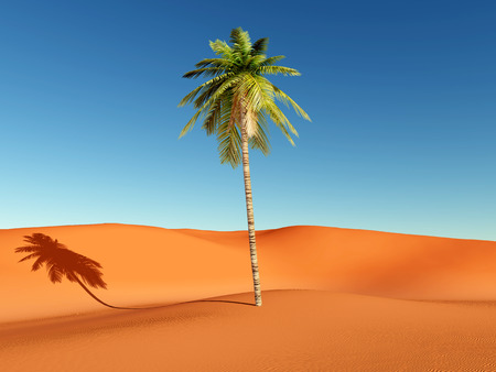 cloudless: Palm in the desert