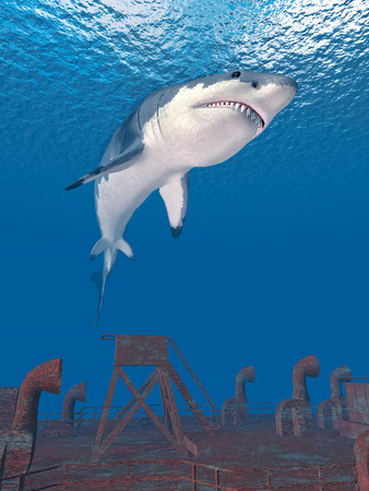 saltwater: Great white shark and shipwreck