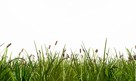 Meadow isolated on white background