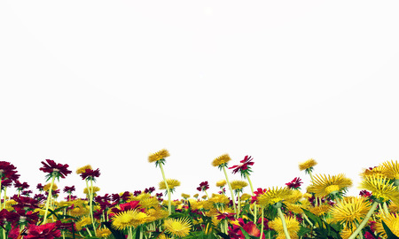 untouched: Wildflower meadow isolated on white background