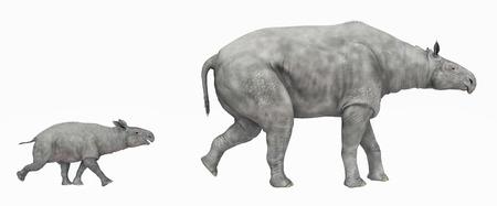 paleontology: Adult Paraceratherium and baby Paraceratherium isolated on white background