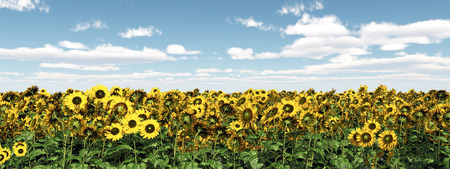 untouched: Sunflowers