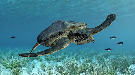 sea turtle: Giant sea turtle Archelon Stock Photo
