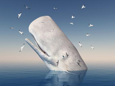 mocha: Mocha Dick and seagulls