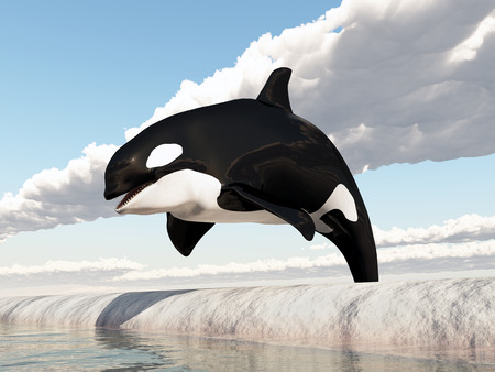 Killer whale jumping over an obstacle